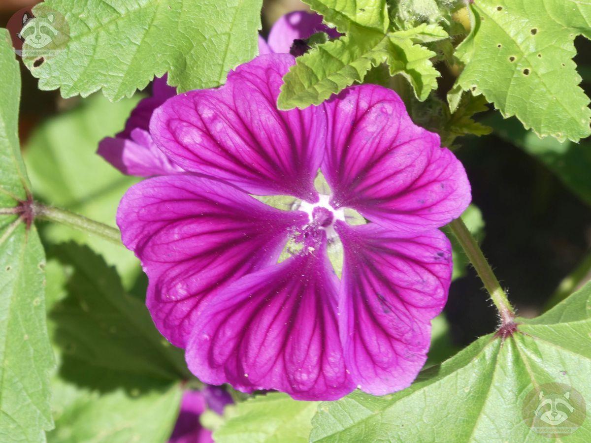 Blume (3)