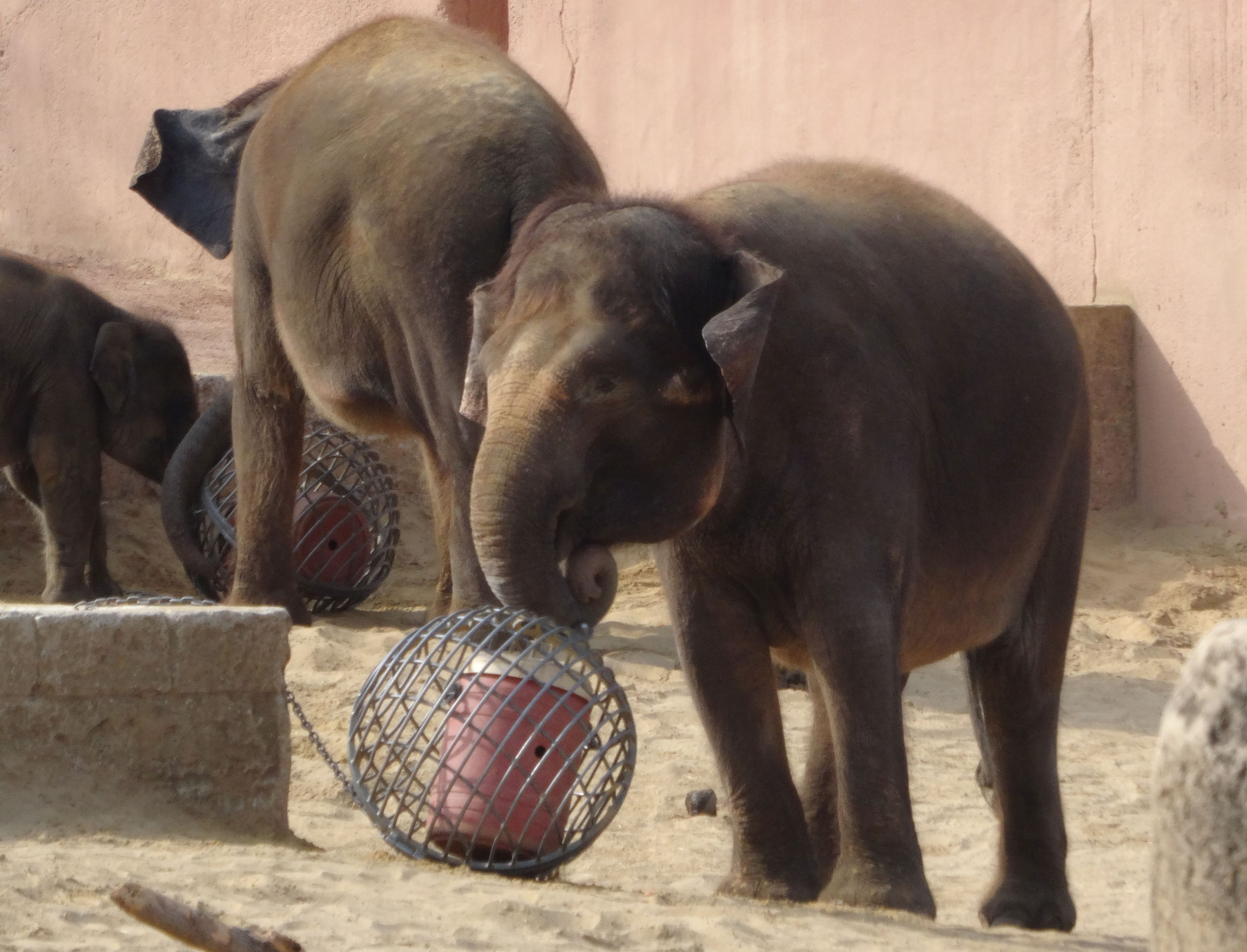 Elefant  (1)