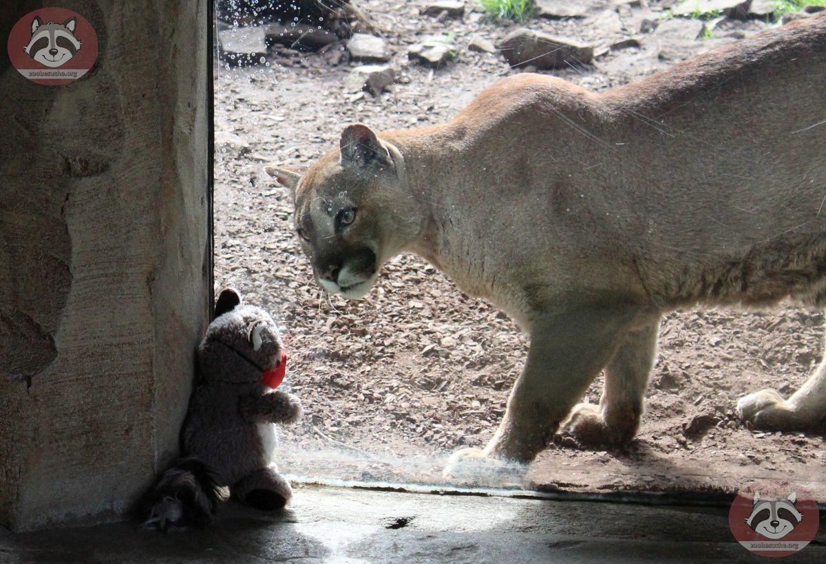 Wuschel mit Puma (12)