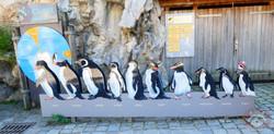 Wuschel auf Pinguin