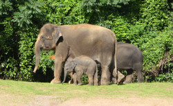 Elefanten  (27)