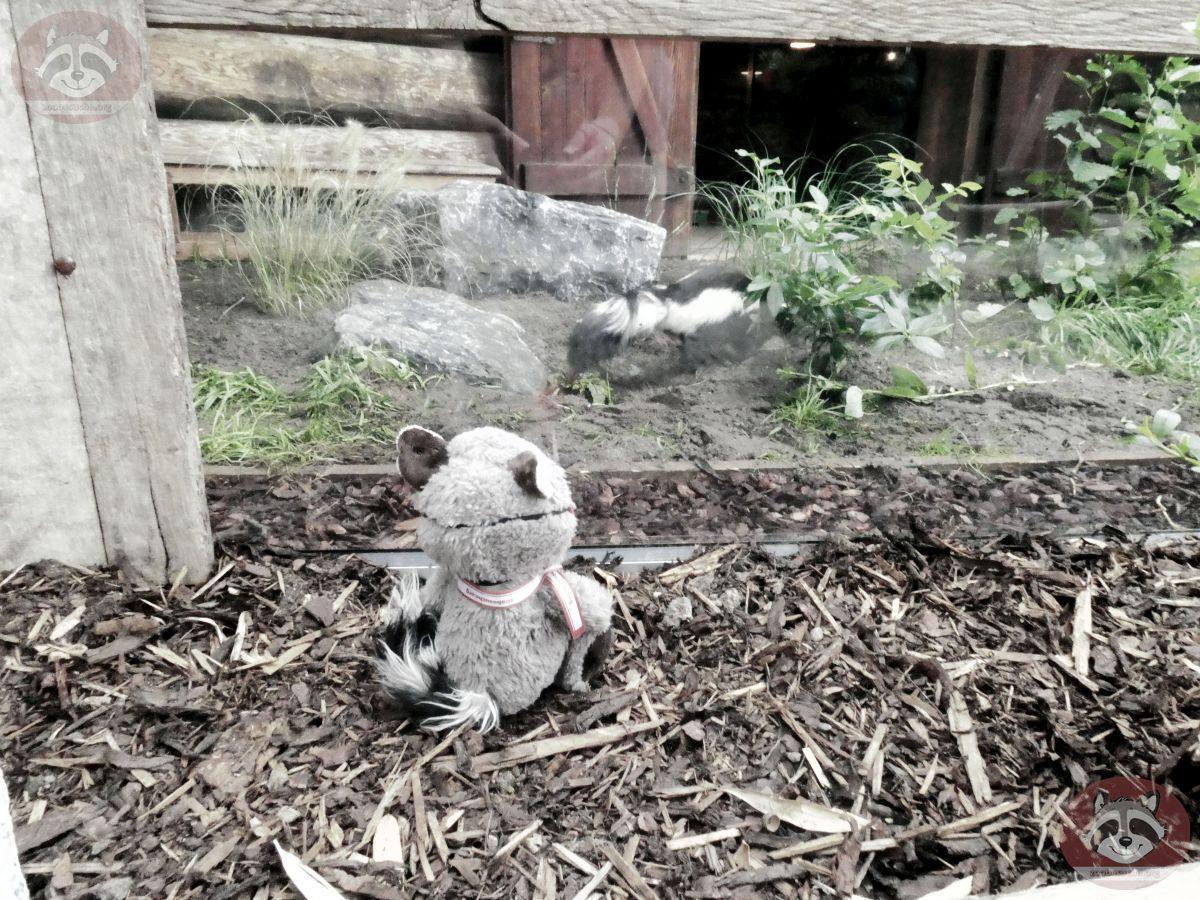 Wuschel mit Stinktier (1)