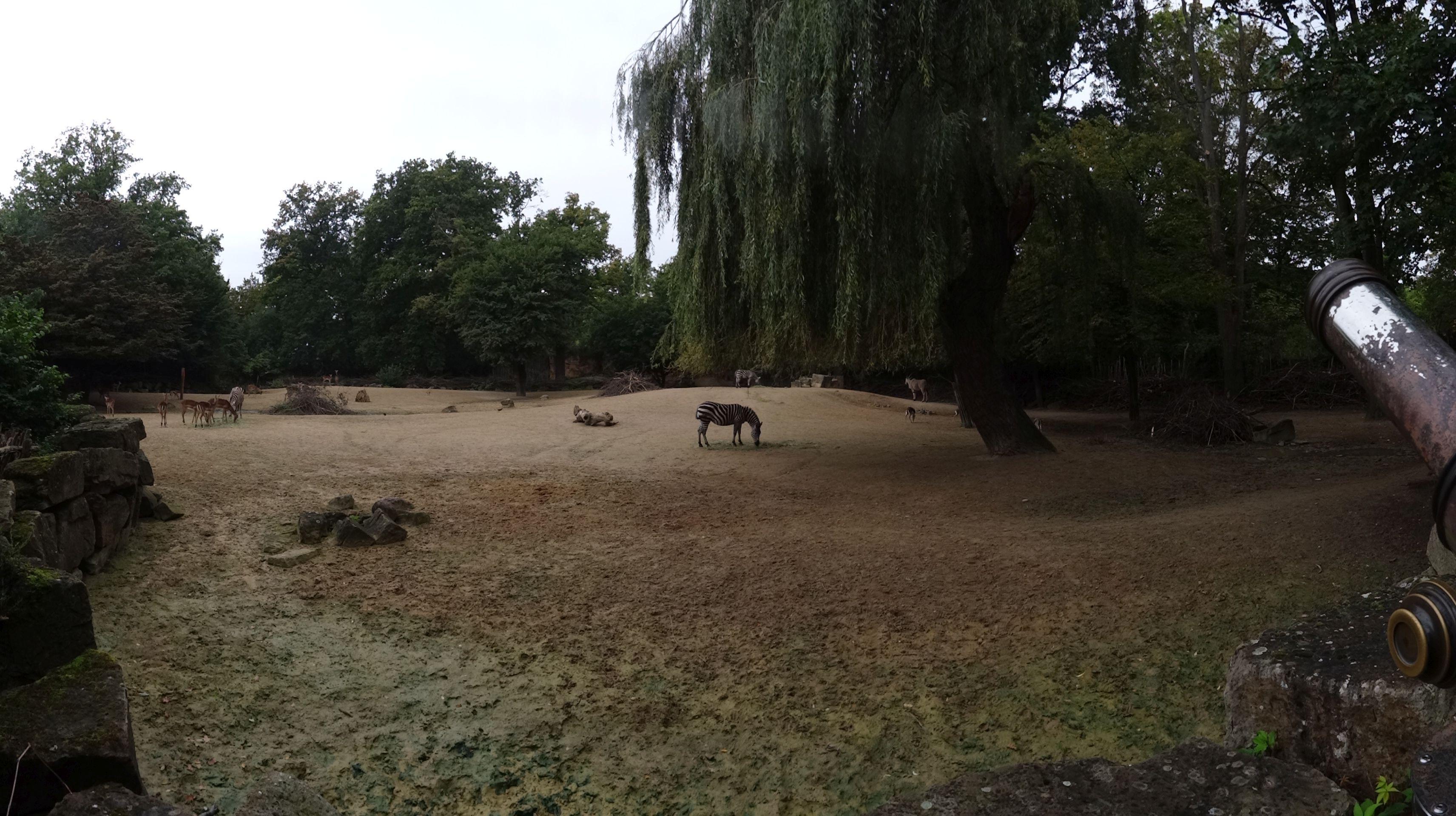 Anlage Antilopen