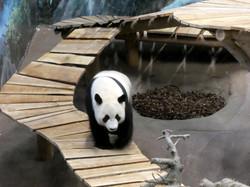 Panda  (5)