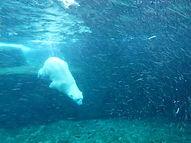 Eisbär  (7).jpg