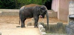 Indra  (12)