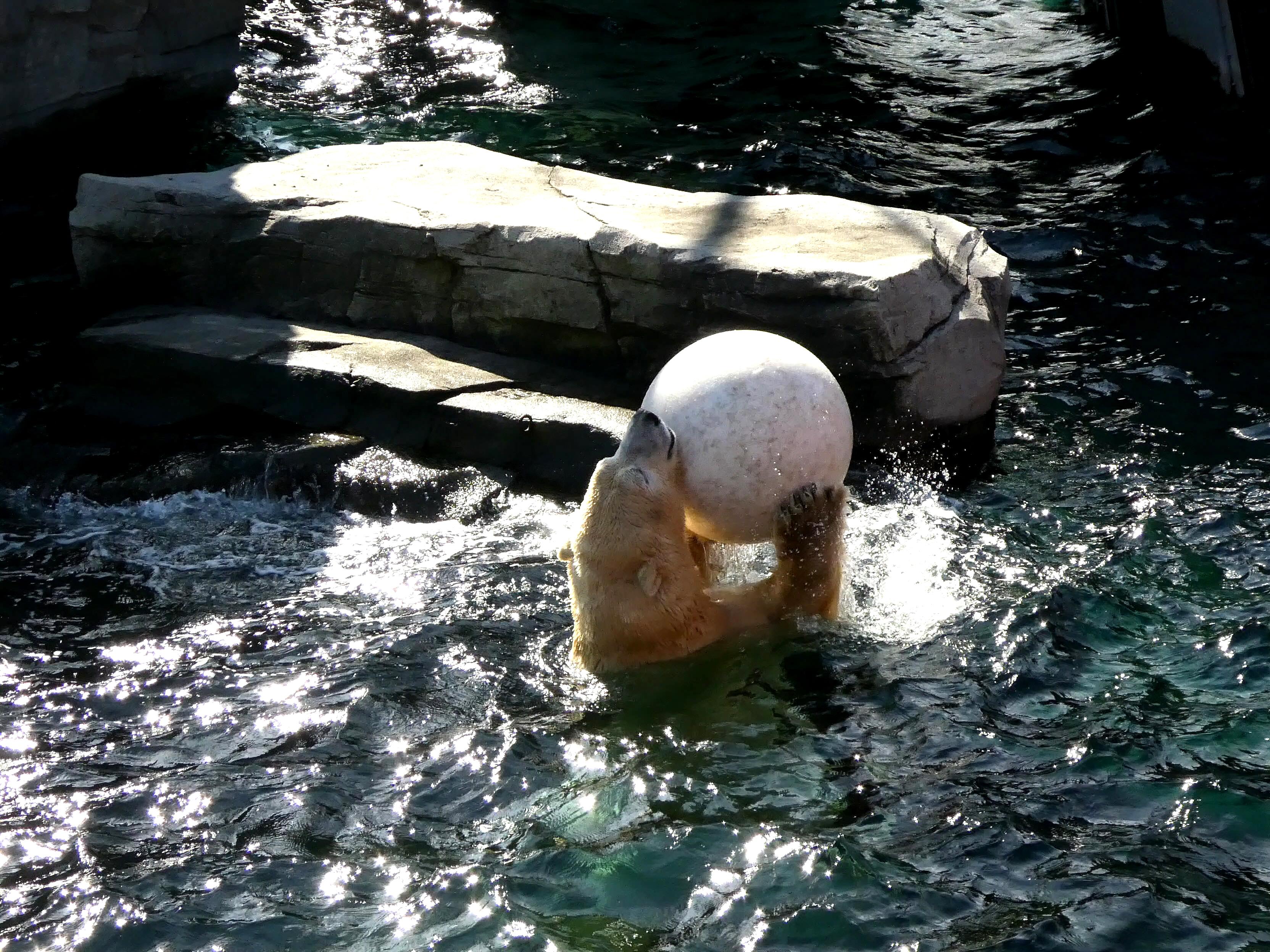Eisbär  (25)