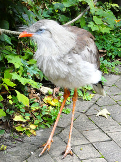 Vogel  (1)