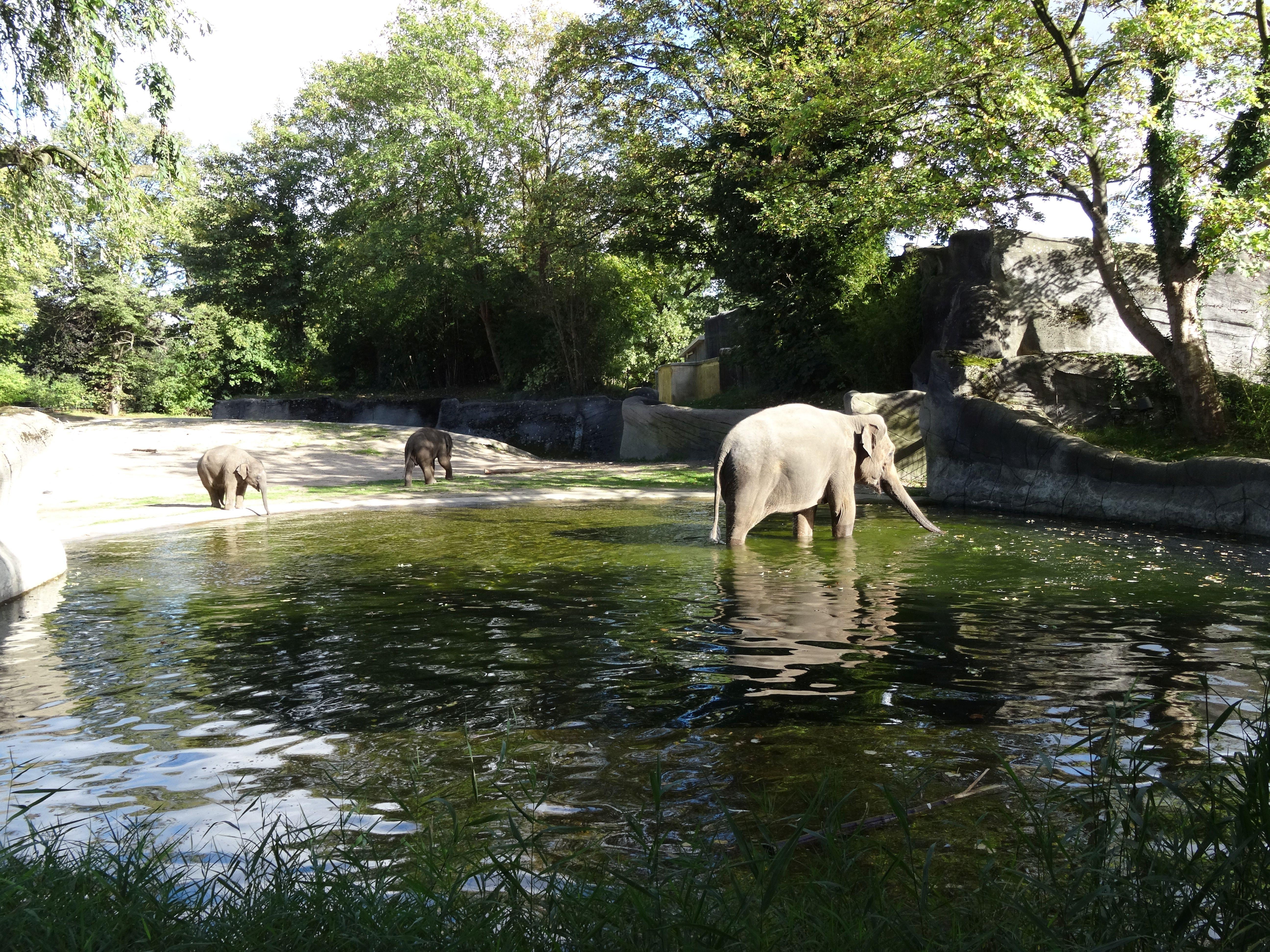 Elefanten  (13)