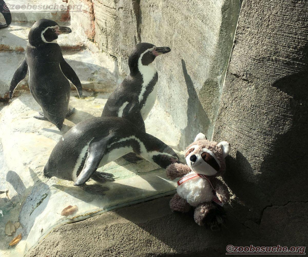 Pinguin mit Wuschel  (2)
