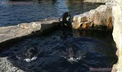 Seebären  (12)