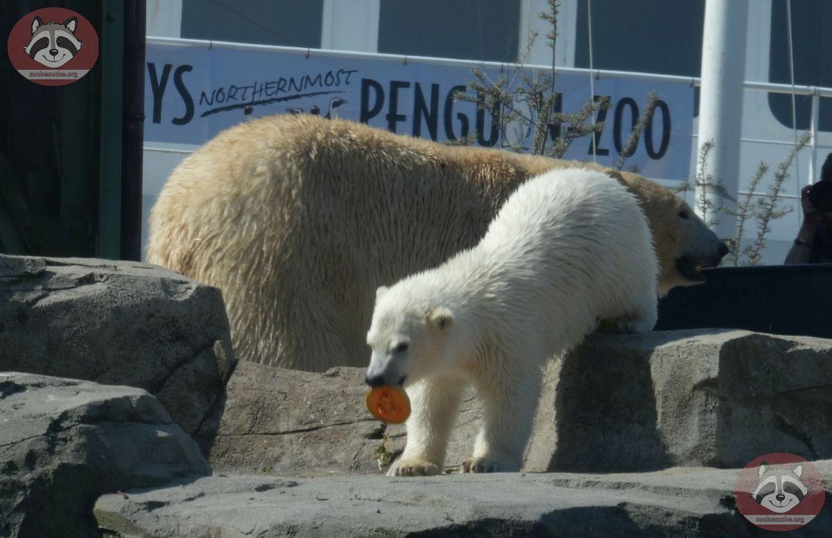 Eisbären_Milana_und_Nana_(17)