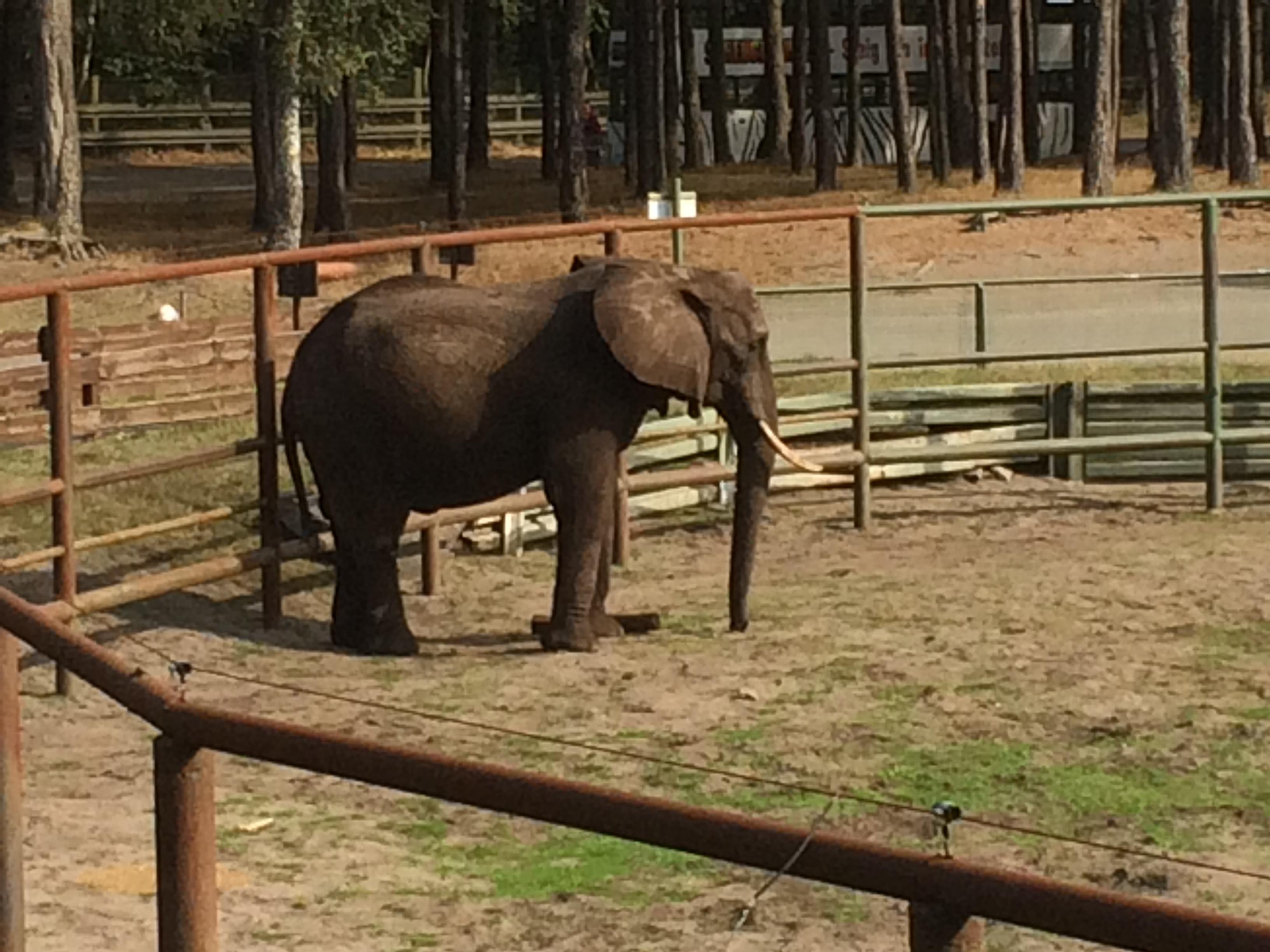 Serengeti Park 343