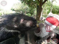 Stachelschwein mit Wuschel (2)