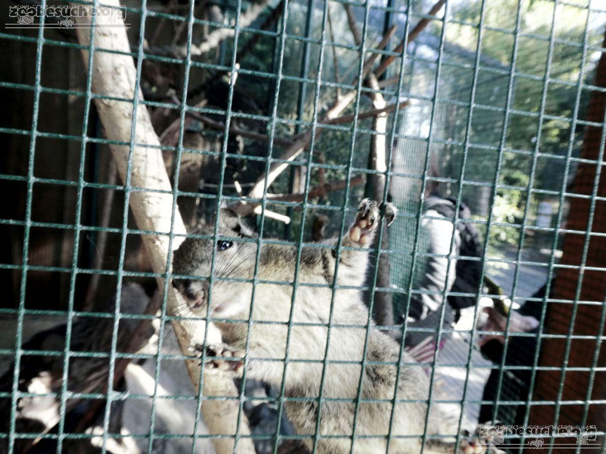 Chinesisches_Baumstreifenhörnchen__(6)
