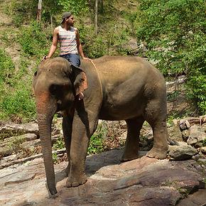 Markus_Köchling_Elefant.jpg