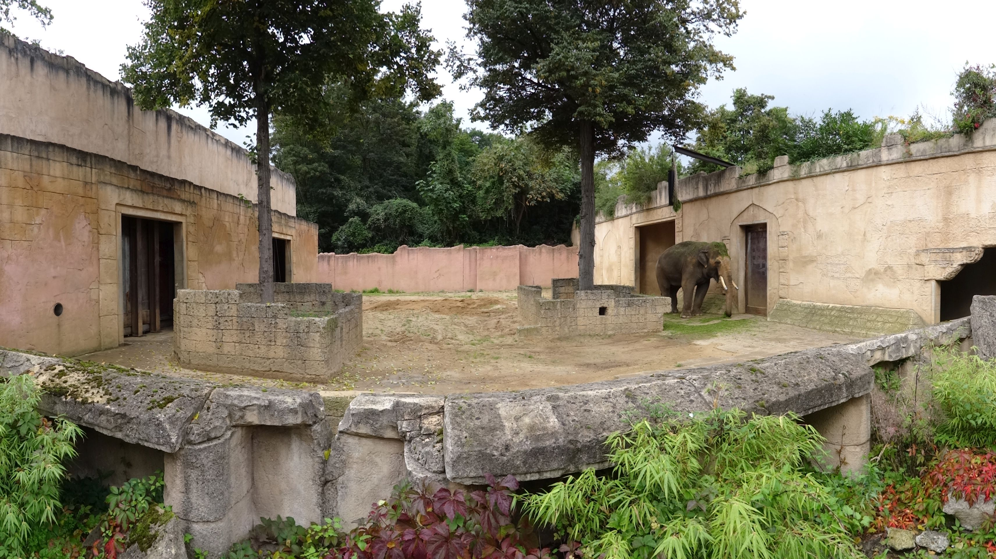 Anlage Elefantenbulle