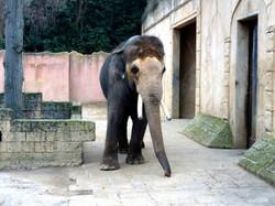 Elefanten  (1)