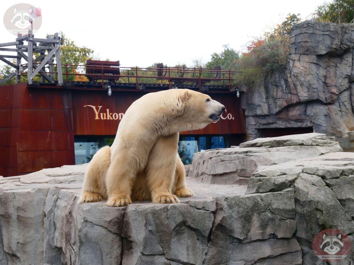 Eisbär Sprinter (2)