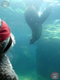 Seebär mit Wuschel (1)