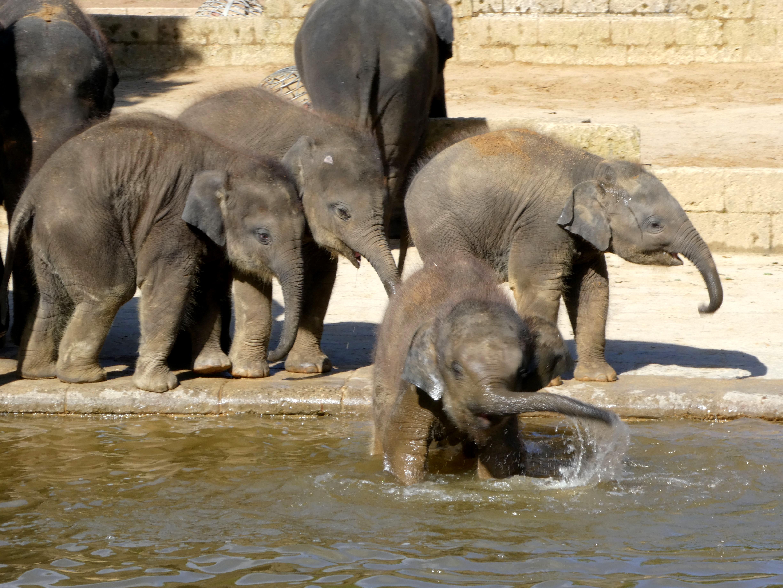 Elefanten  (23)