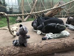 Wuschel mit Schimpanse  (6)