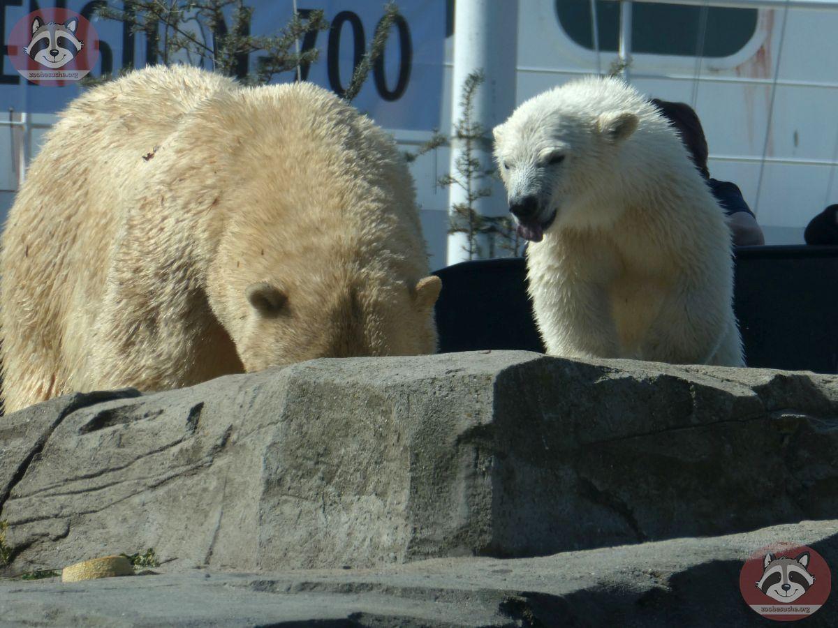 Eisbären_Milana_und_Nana_(23)