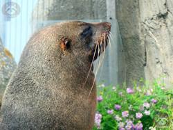 Seebär (5)