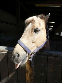 Pferd  (4)
