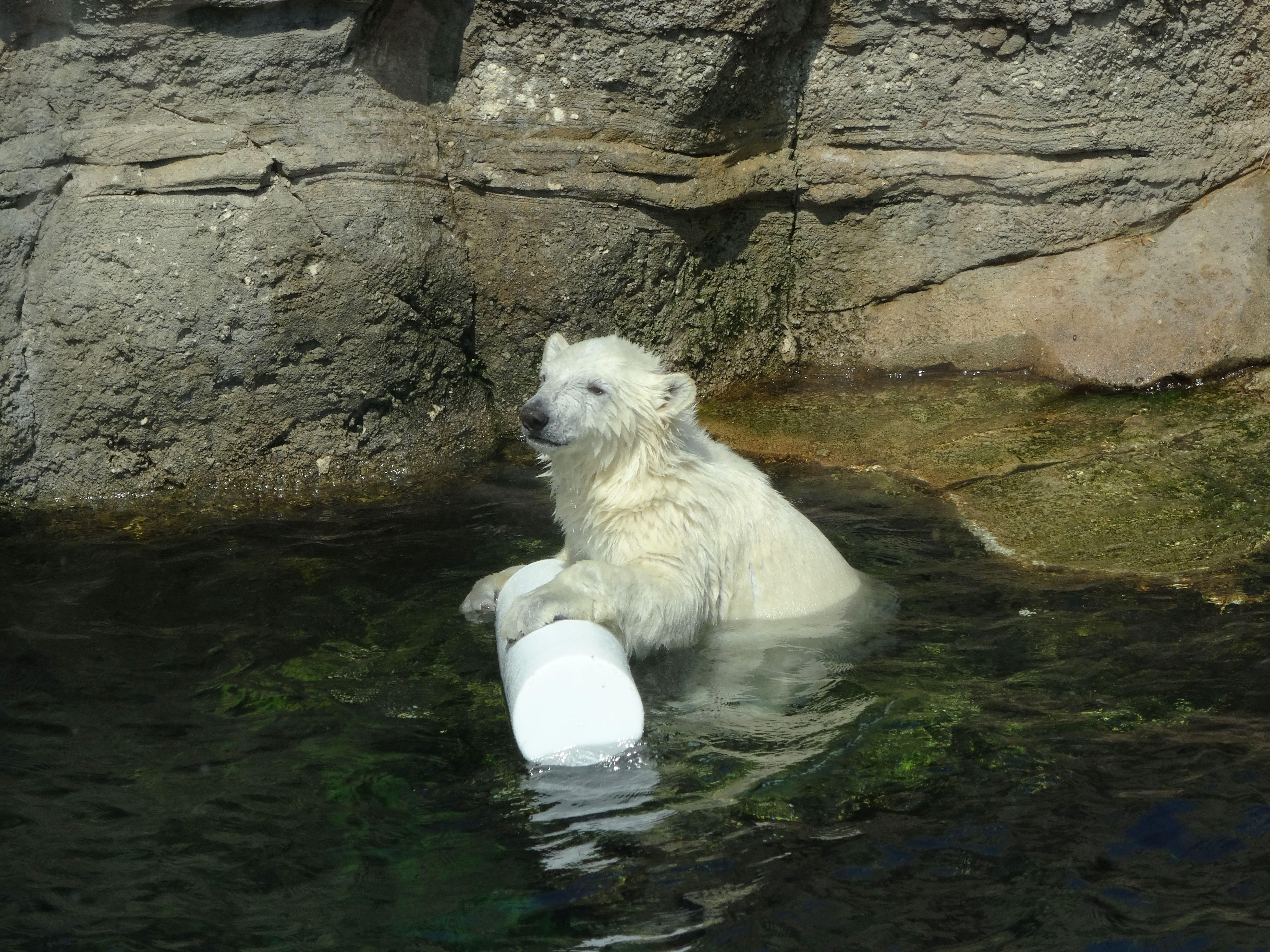Eisbärin Lili