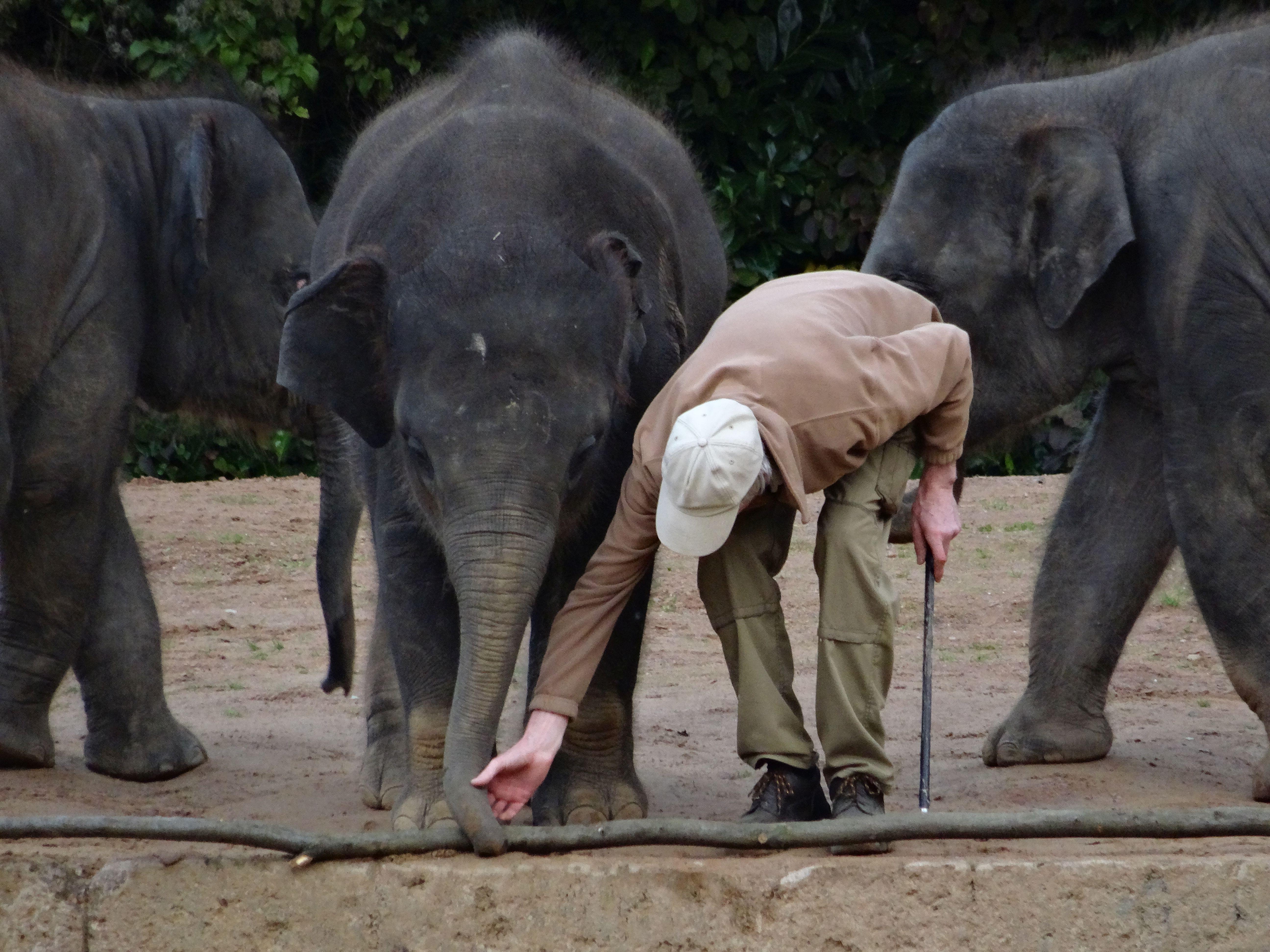 Elefant  (6)