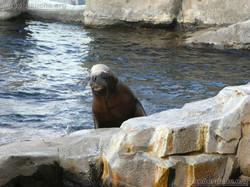 Seebären  (10)