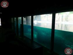 Flusspferde Innen