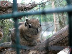 Baumstreifenhörnchen_(5)