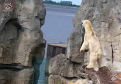 Eisbär Loyd (2)