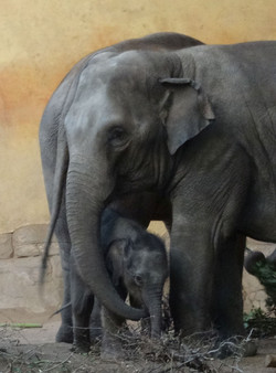 Eelefant  (10)