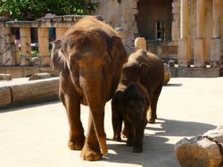 Elefanten  (14)