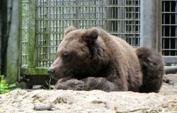 Bären  (5)