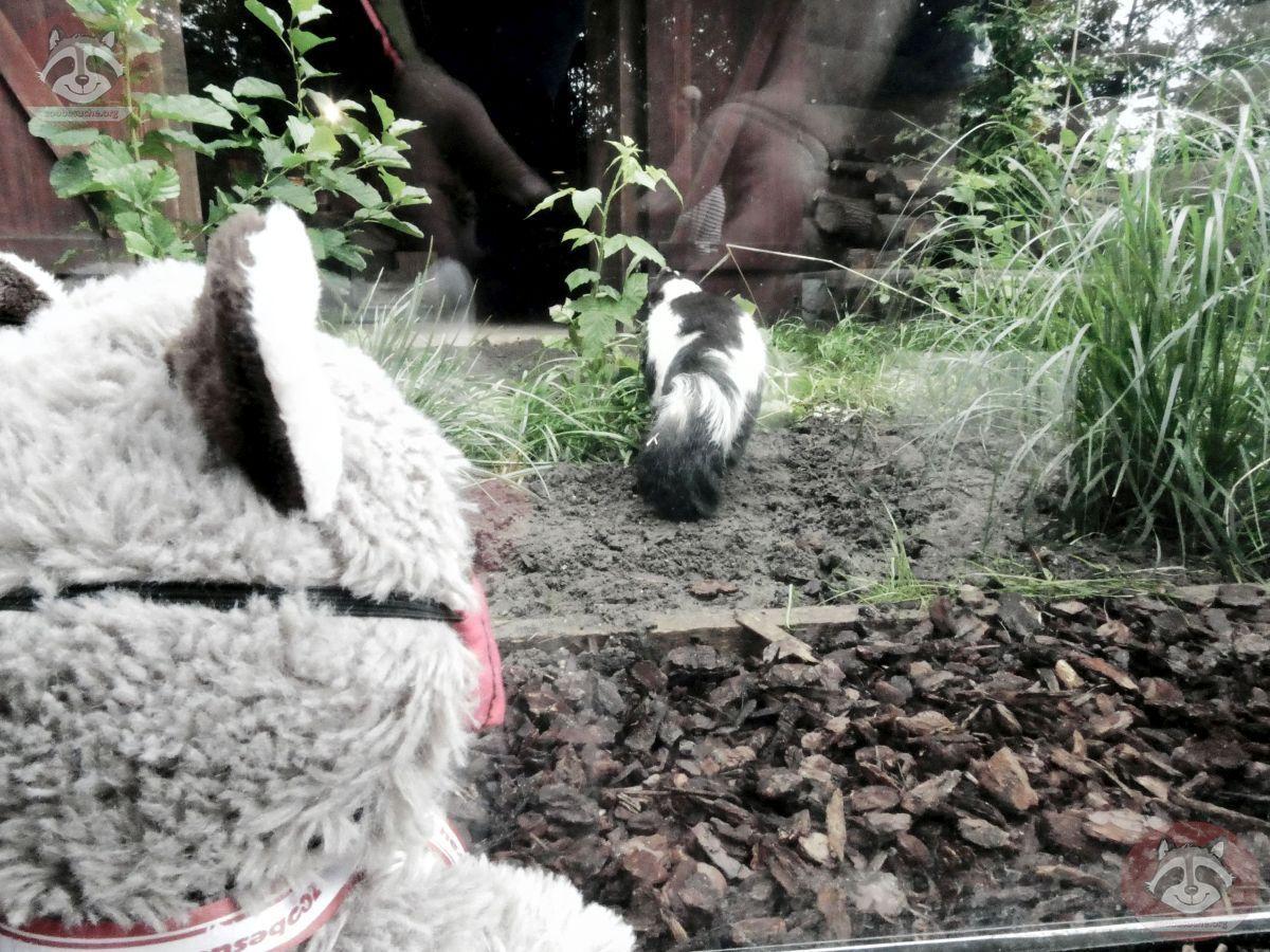 Wuschel mit Stinktier (2)