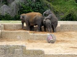 Elefanten  (26)