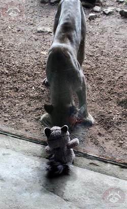 Wuschel mit Puma (7)