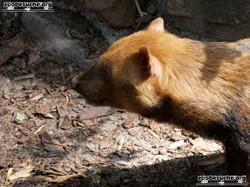 Waldhund  (3)
