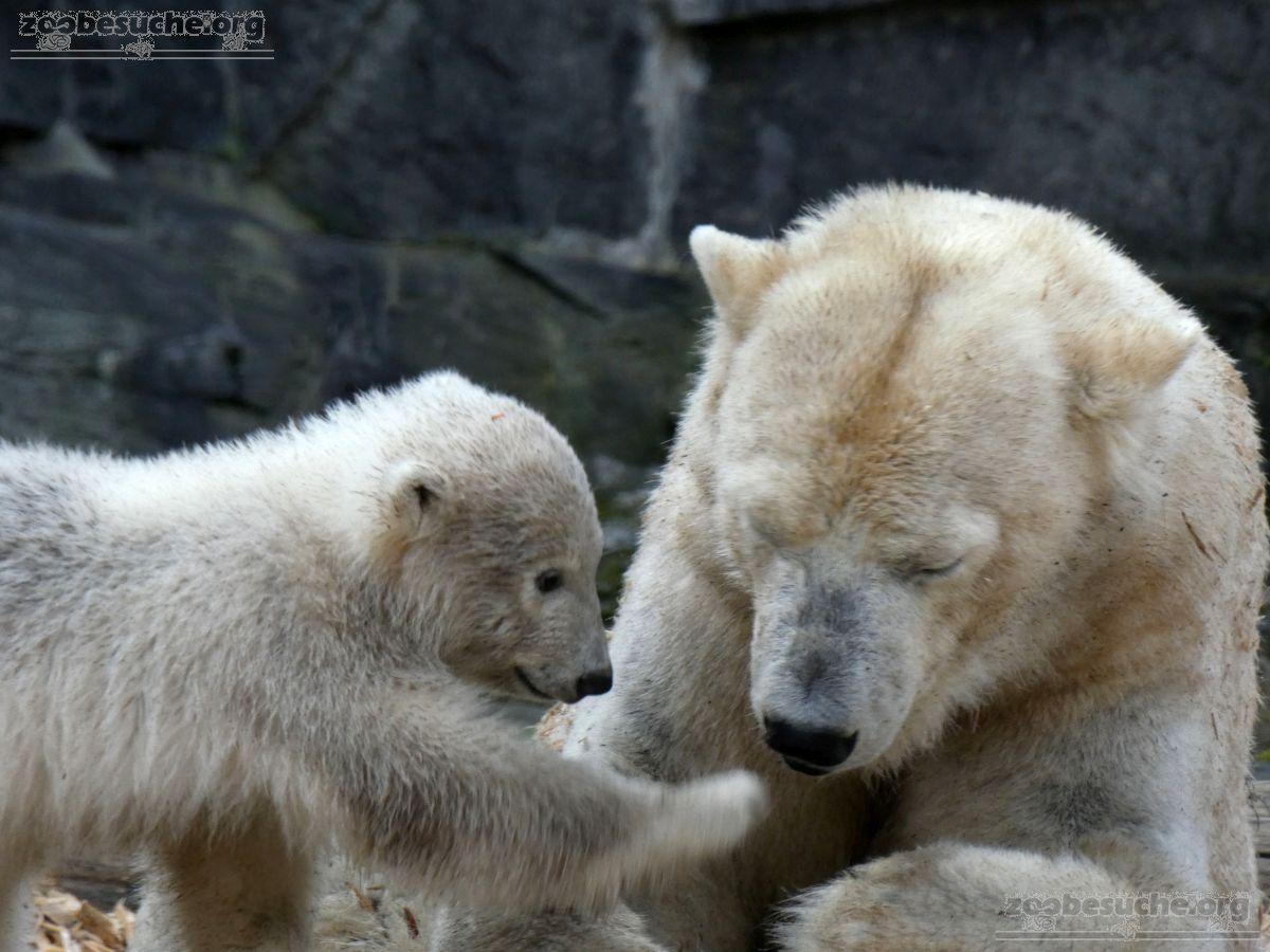 Eisbär  (48)