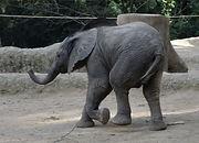 Elefant (13).jpg
