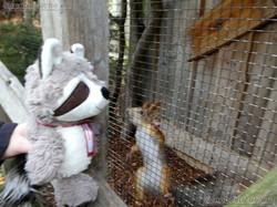 Wuschel bei den Eichhörnchen