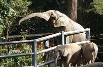 Elefant (10).jpg