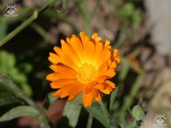 Blume (2)
