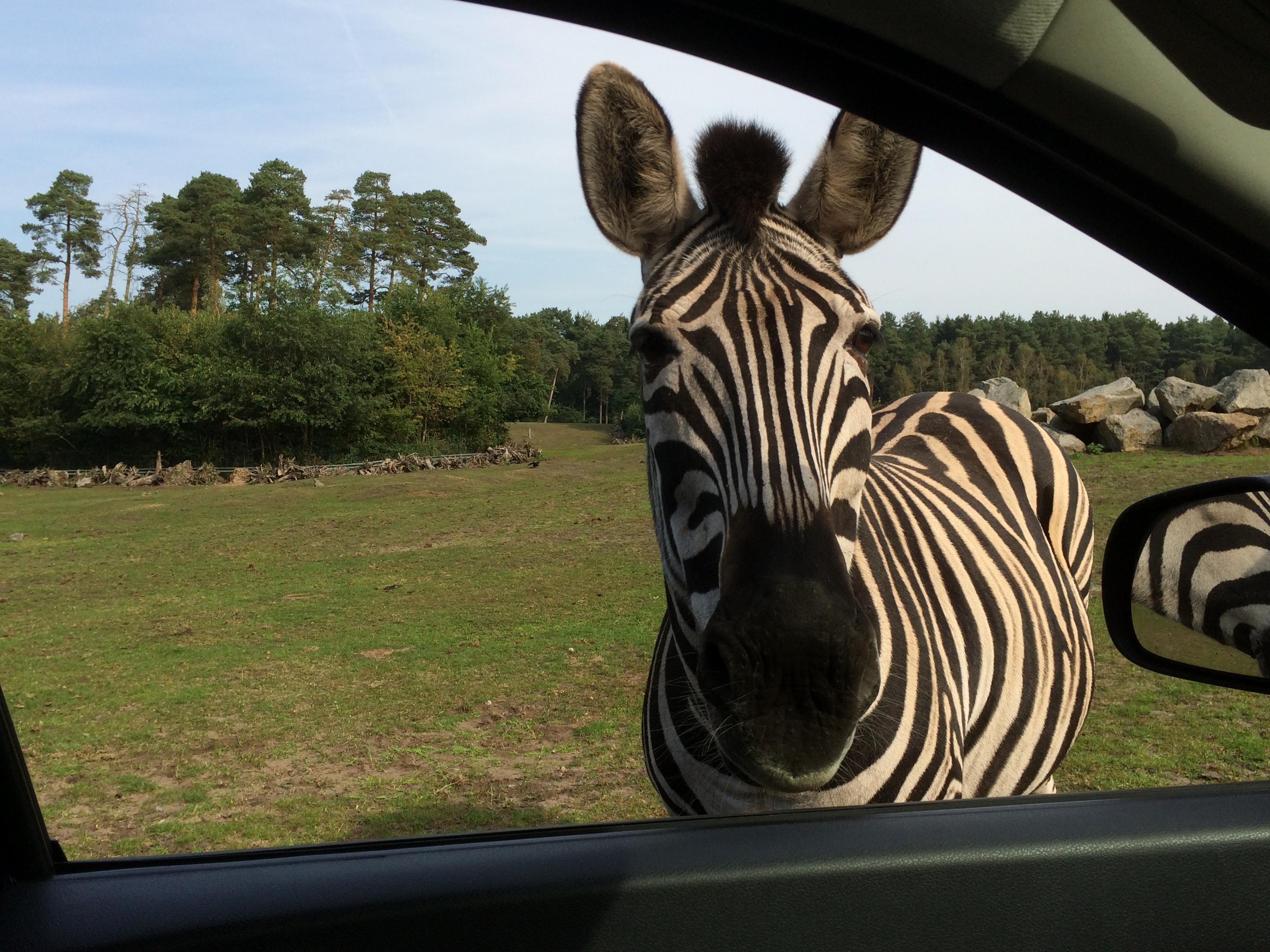 Serengeti Park 297