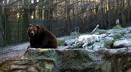 Bär und Wolf (4).jpg