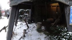 Schneeeulen  (5)